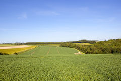 Extensive wheat fields Stock Images