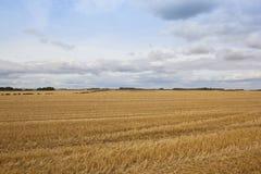 Wheat stubble fields Royalty Free Stock Image