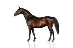 Exterior bay horse Royalty Free Stock Photo
