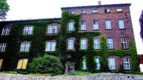 Wawel Castle exterior, Krakow, Poland. Exterior of brick exhibition center of Wawel Castle, overgrown with grapes, swaying on the wind, Krakow, Poland stock footage