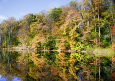 Trees on shore of Lake Surprise Royalty Free Stock Photos