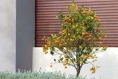 Exterior de adornamiento de la casa del árbol de fruta cítrica Imagen de archivo libre de regalías