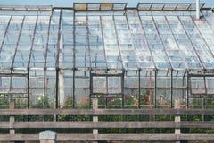 exterior de vidro da estufa Imagem de Stock Royalty Free
