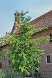 Exterior of Elizabethan cottage Royalty Free Stock Images