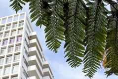 Exterior front view, Hollywood Versailles Tower, California. Exterior full front view of Hollywood Versailles Tower with palm tree leaf hanging on the street of stock image