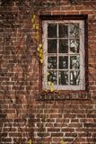 Brick building with vines growing around a window stock photo