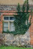 Exterior of an old stone and brick house with vintage window frame, covered with creeper plant royalty free stock images