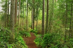 Pacific Northwest forest hiking trail. A exterior picture of an Pacific Northwest forest hiking trail Stock Images