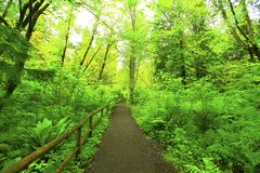 Pacific Northwest forest hiking trail Royalty Free Stock Photos
