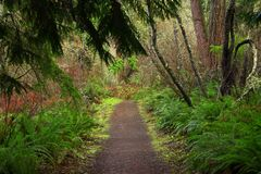 Pacific Northwest forest trail Stock Photos