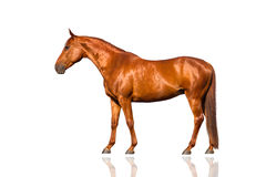 Exterior  red horse Royalty Free Stock Image