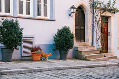 The exterior of a simple traditional beautiful blue house with plants and pets in Rothenburg ob der Tauber in Germany. European city. Architecture Royalty Free Stock Images