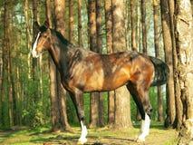 Exterior of sportive horse Stock Photos