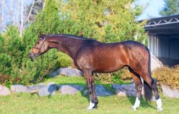 Exterior of sportive warmblood horse posing in nice place
