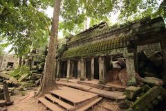 Ta Prohm temple ruins, Angkor, Cambodia Stock Photo
