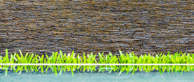 Exterior Wall Of Modern Beautiful Building, Brick Wall With Little Green Tree And Its Reflection On Water. Stock Image