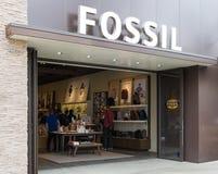 Exterior y muestra fósiles de la tienda Imagenes de archivo