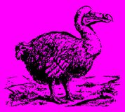 Extinct dodo raphus cucullatus standing in a landscape. Illustration after an antique engraving or etching from the 19th century. Editable in layers vector illustration