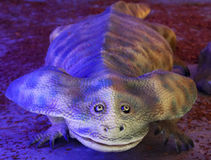 An Extinct Giant Amphibian Named Diplocaulus, Double Caul Royalty Free Stock Photography