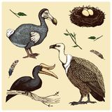 Extinct species birds, griffon vultures, rhinoceros hornbill. moa, dodo and feather. engraved hand drawn in old sketch Stock Photography