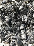 Extinct wooden coal in the forest. Extinct wooden coal with ash in the Pine tree forest in Ukraine stock photos