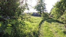 Extinction de la broussaille verte à la lumière du soleil clips vidéos