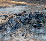 Extinguished bonfire in the forest on the sand. On a summer afternoon royalty free stock photography