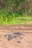 An extinguished bonfire in the forest royalty free stock images