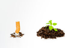 Extinguished cigarette and green newborn plant isolated. On white background - Stop smoking for the environment royalty free stock photos