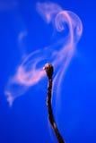 Extinguished Match On Blue Stock Photos