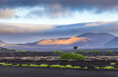 Extinguished volcanoes in Timanfaya National Park Royalty Free Stock Photography