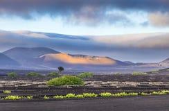 Extinguished volcanoes in Timanfaya National Park. Lanzarote stock images