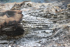 Extinguished wood. The extinguished wood background image stock image