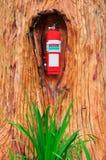 Extintor rojo en el árbol Fotografía de archivo