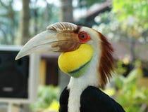 extoic的鸟 库存照片