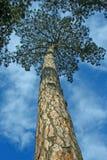 Extrémité de la forêt Images stock