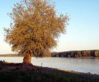 Extrémité de saule de la rivière Photo stock