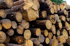 Extrémité de troncs d'arbre de pile d'un fond de notation scié de construction d'une conception rustique de beaucoup de rondins photos libres de droits