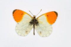 Extrémité orange Photo libre de droits