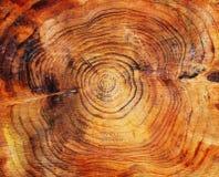 Extrémité sciée d'un arbre de pin Photo libre de droits