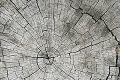 Extrémité sciée grise de logarithme naturel Photos libres de droits