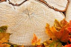 Extrémité sciée par arbre Photos libres de droits