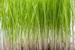 Extrémités d'herbe Images libres de droits