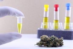 Extração do óleo do cannabis fotografia de stock royalty free