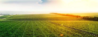 Extra au loin tir panoramique d'un vignoble d'été Photos libres de droits