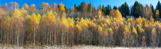 Extra bred panorama av en ursnygg skog i höst, ett sceniskt landskap med angenämt varmt solsken royaltyfri foto