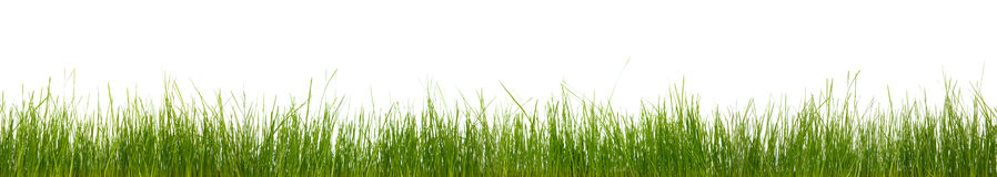 Extra large horizontal grass Royalty Free Stock Images