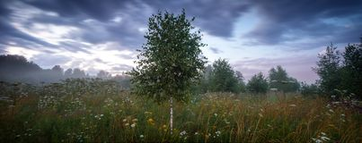 Extra large panorama summer meadow and forest before a storm Stock Photos