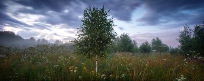 Extra stor panoramasommaräng och skog för en storm arkivfoton