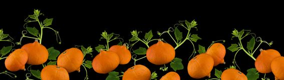 Pumpkin border or banner in panorama format for Halloween or Thanksgiving isolated on black background. Extra wide Halloween or Thanksgiving border with pumpkins stock photos